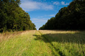 Grassy path — Stock Photo