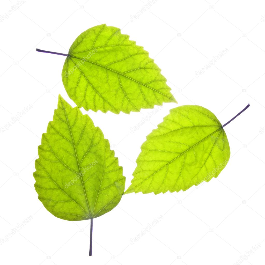 Three green leaves — Stock Photo #2843335