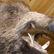 Wild boar. Stuffed animal - Foto Stock