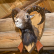 Royalty-Free Stock Photo: Goat. Stuffed animal