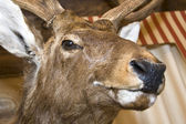 Herten. knuffeldier — Stockfoto