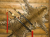 Skin of leopard with swords on the wall — Stock Photo