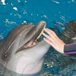 Smiling dolphin — Stock Photo #3152389
