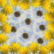 Dandelions frame — Stock Photo