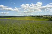 Zelená pole a modré nebe — Stock fotografie