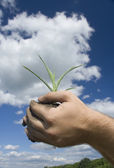 Young plant in palms of hands — Stock Photo