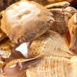 Stock Photo: Secrab on shell