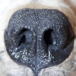 Polar bear nose — Stockfoto
