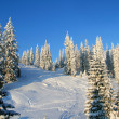 Stock Photo: Snowcapped pines