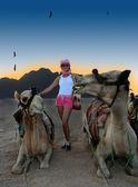 Camels in desert — Stock Photo