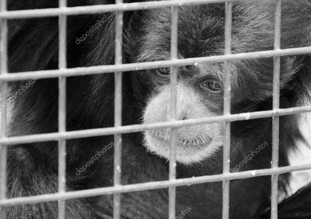 伤感孤独动物图片