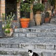 Stock Photo: Cat sitting on alley steps