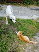 Dog and kitty — Stock Photo