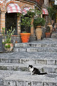 Cat sitting on alley steps — Stock Photo