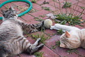 Cats playing — Stock Photo