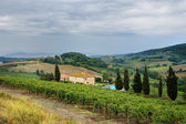 Tuscan hills — Stock Photo