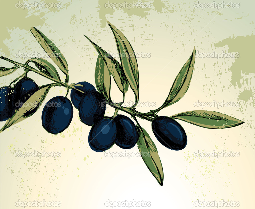 Vector illustration of black olives  Stock Vector #3258372