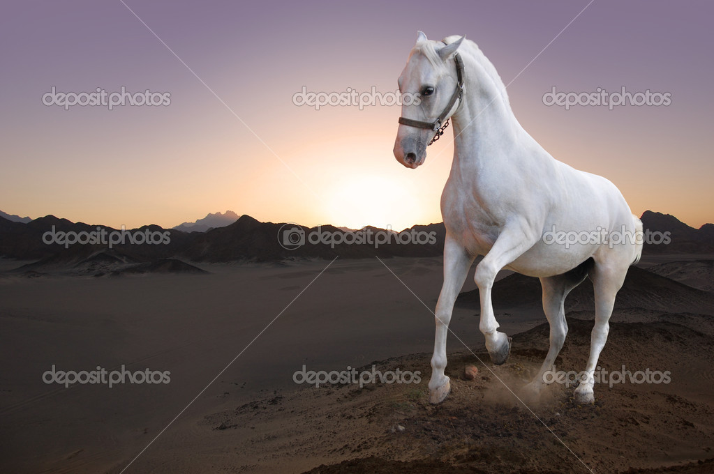 Photo of white horse and the sunset  — Stock Photo #3915729