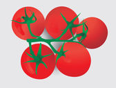 Five red tomatoes on a branch — Stock Vector