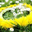 Wreath from yellow dandelions — 图库照片 #3302836