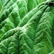 Green leaves — Stock Photo #3302988