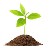 Young green plant — Stock Photo