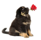 Puppy fog with flower — Stock Photo