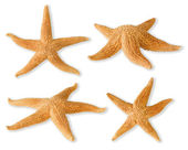 Sea-stars — Stock Photo