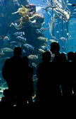 Fish aquarium — Stock Photo