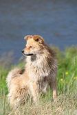Nehir üzerinde bir köpek — Stok fotoğraf