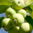 Apple Branch — Stock Photo #3615422