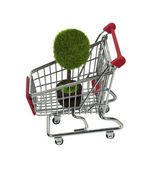 Potted Tree in Shopping Cart — Stock Photo