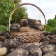 Stock Photo: Potatoe basket