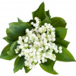Lily of the valley — Stock Photo #3167969