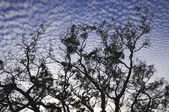 Cloudscape and tree shadow — 图库照片