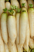 Daikon - Japanese radish — Stock Photo