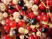 Red, white, black currant — Stok fotoğraf