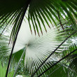 Palm leafs - Stock Photo
