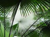 Palm blätter — Stockfoto