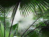 Palm leafs — Stockfoto