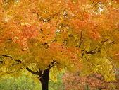Autumn In Ohio — Stock Photo