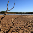 Georgia Drought - Stock Photo