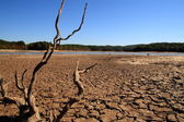 Georgia Drought — Stock Photo