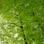 Spring woodland — Stock Photo #3721539
