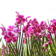 Pink orchids — Stock Photo #3136887