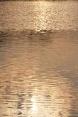 солнечных отражений в воде — Стоковое фото