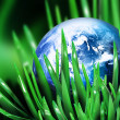 Blue world in grass — Stock Photo #3001542