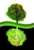 Yin yang tree — Stock Photo