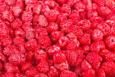 Many fresh red raspberry — Foto Stock