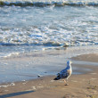 Seagull on beach — Stock Photo #3569033